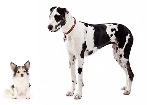 dog-comparison