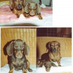 picture-of-two-dogs-on-top-box-3-tahiti
